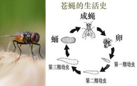 上门除蚊蝇公司